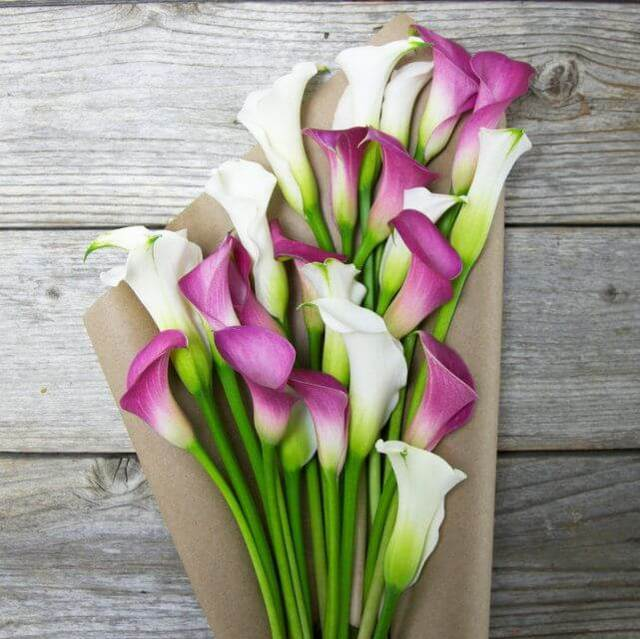 Calla20Lily20White20And20Purple20Flower20Venera20Flowers202 1