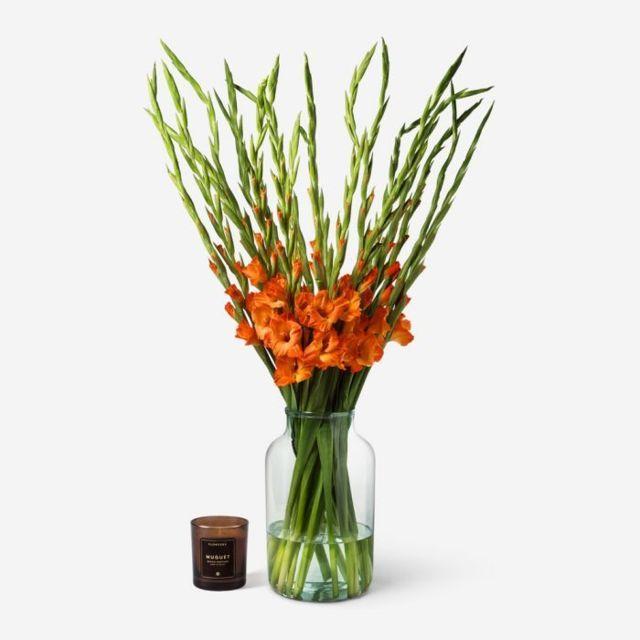Gladiolus20Orange20Fresh20flower20Venera20Flowers201 1