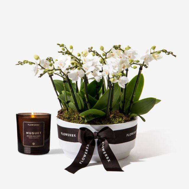 Orchid20White20Plant20Premium20Venera20flowers201 1
