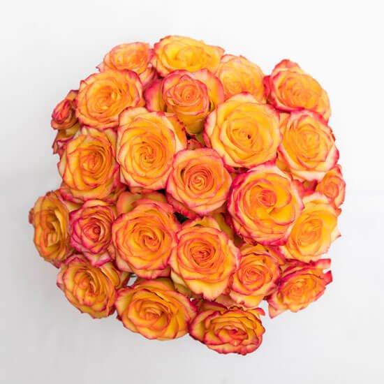 Rose20Orange203520Flower20Venera20Flowers203 1