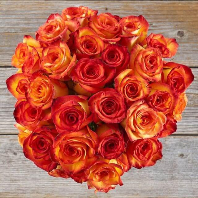 Rose20Orange20Flower20Venera20Flowers201 1