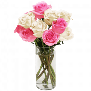 Rose20Pink20And20White20Flower20Venera20flowers 1