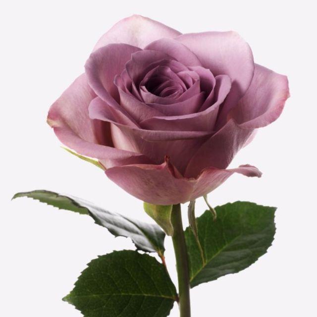 Rose20Vase20Purple20Fresh20Venera20Flowers202 1