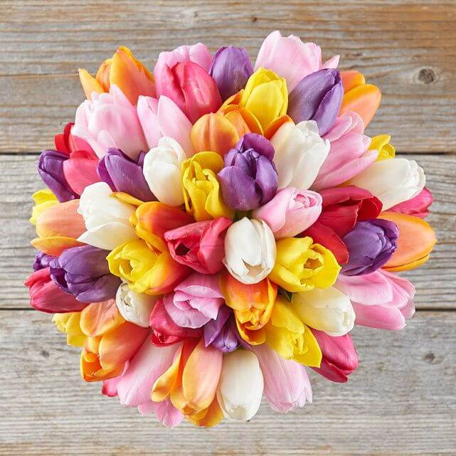 Tulip20Mix20Color20Flower20Venera20Flowers203 1
