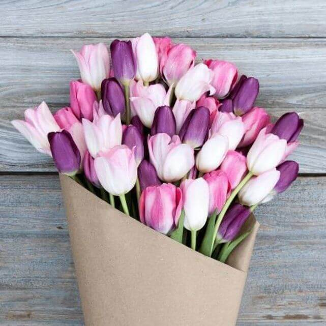 Tulip20Pink20And20Purple20Flower20Venera20Flowers202 1